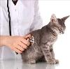 Ветеринарные клиники в Красногородском